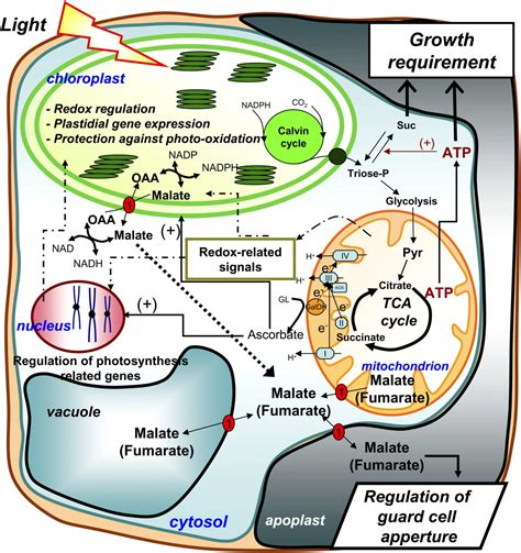 Targeting Mitochondrial Metabolism and Machinery as a