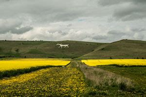 Visit White Horse Wiltshire - Camping in the Forest