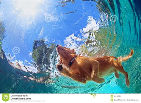 Underwater Photo Of Dog Swimming In Outdoor Pool Stock