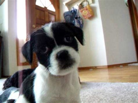 confused puppy - YouTube