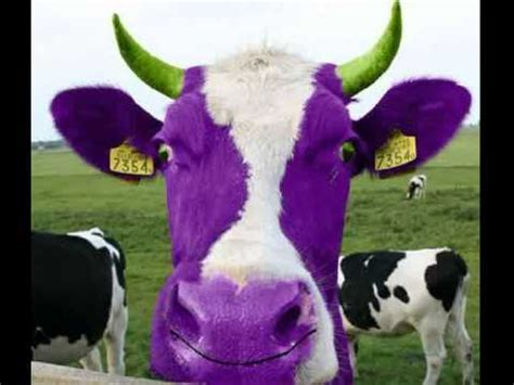 Happy birthday from cows & cows & cows - YouTube