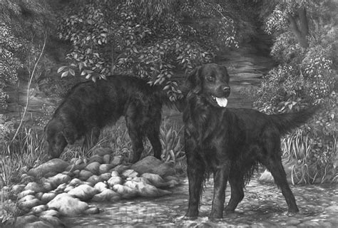 FLAT COATED RETRIEVER fine art dog print by Mike Sibley
