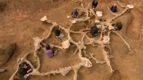 BBC Two - The Burrowers: Animals Underground, Uncovering