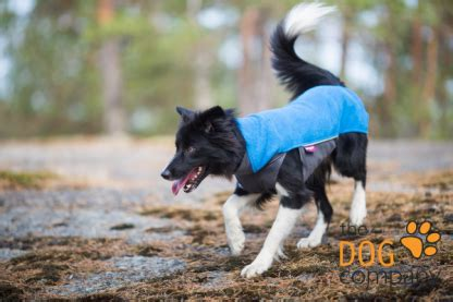 JumppaPomppa sweater - The Dog Company